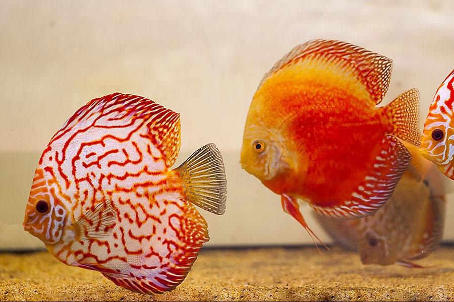 Aquarium Lab, negozio acquari su misura a Carpi, Modena. Pesci rari e tropicali