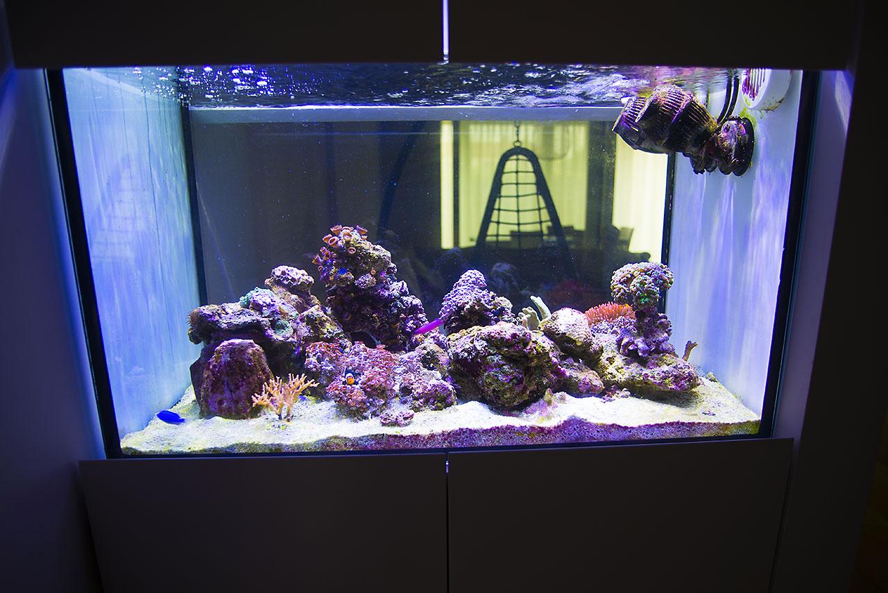 Aquarium lab negozio di acquari su misura vendita di for Acquario tartarughe vendita
