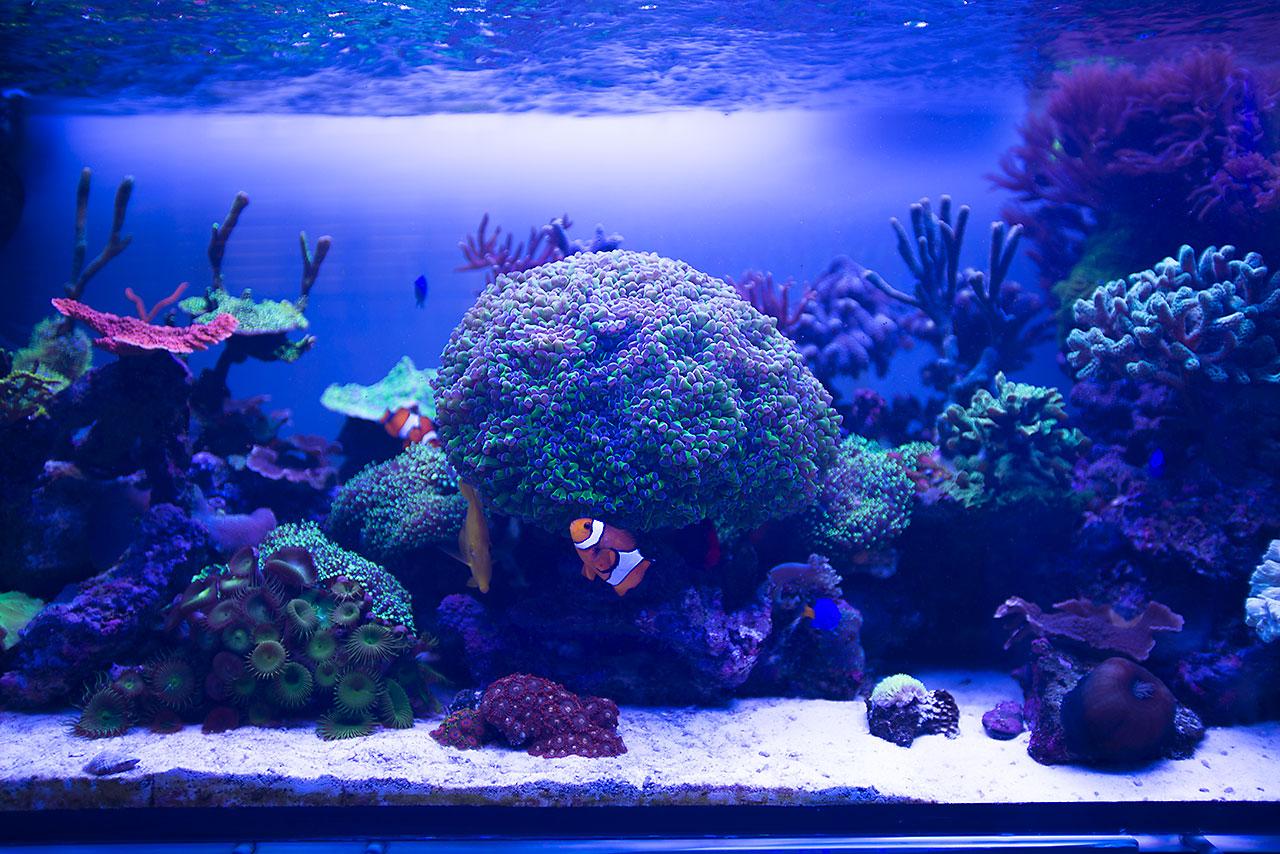 Aquarium lab negozio di acquari su misura vendita di for Acquario esterno per tartarughe