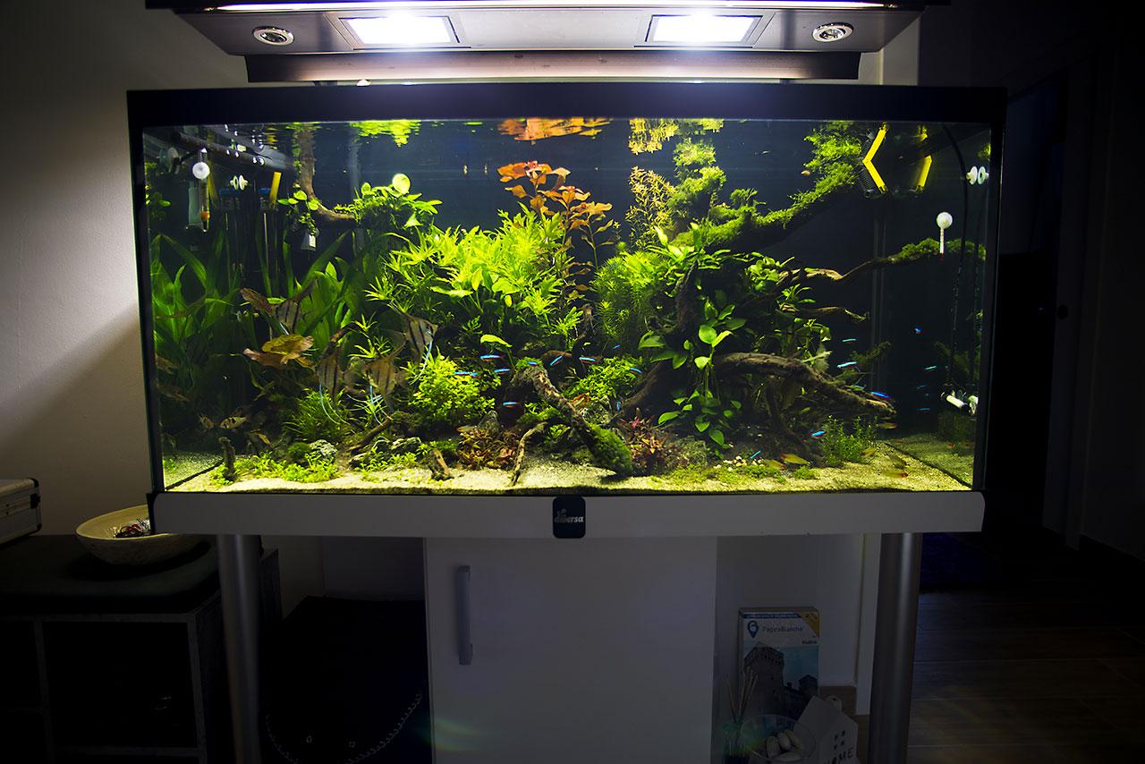 Aquarium lab negozio di acquari su misura vendita di - Mobili per acquari su misura ...